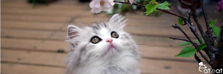 猫用ドライフード